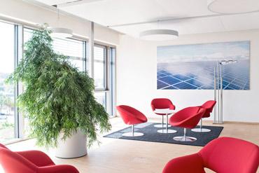 Bürobegrünung Innenraumbegrünung Kassel
